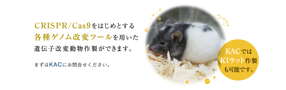 KAC can provide genetically modified mice and rats by using various genome modification tools. Please feel free to contact us for additional information.
